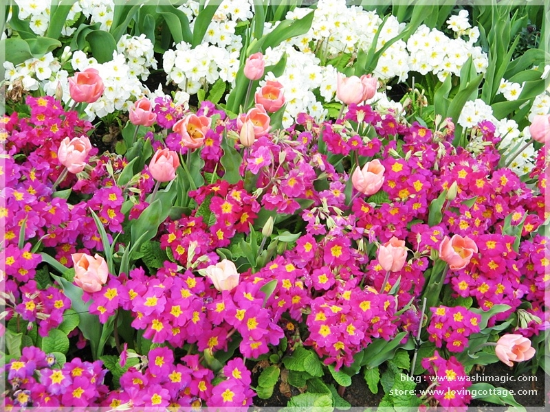 Spring flowers blooming in the about me page | beautiful floral picture | Washimagic.com